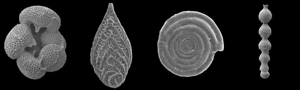 PetroStrat Micropalaeontology Biostratigraphy Foraminifera