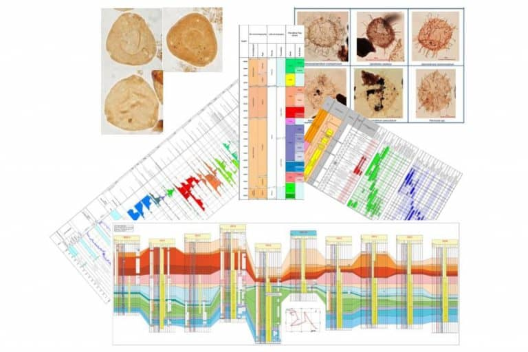 Gulf Of Mexico Onshore Wilcox Study High resolution Biostratigraphy and Sequence Stratigraphy of the Lower Tertiary PetroStrat Featured Image