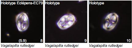 A new nannofossil species Vagalapilla rutledgei Holotype Photograph David Rutledge of PetroStrat