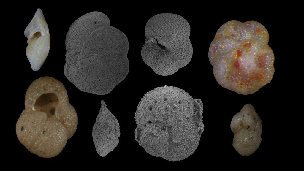 King et al 2020 Caribbean Oligo Miocene planktonic foraminiferal biostratigraphy Paper Review