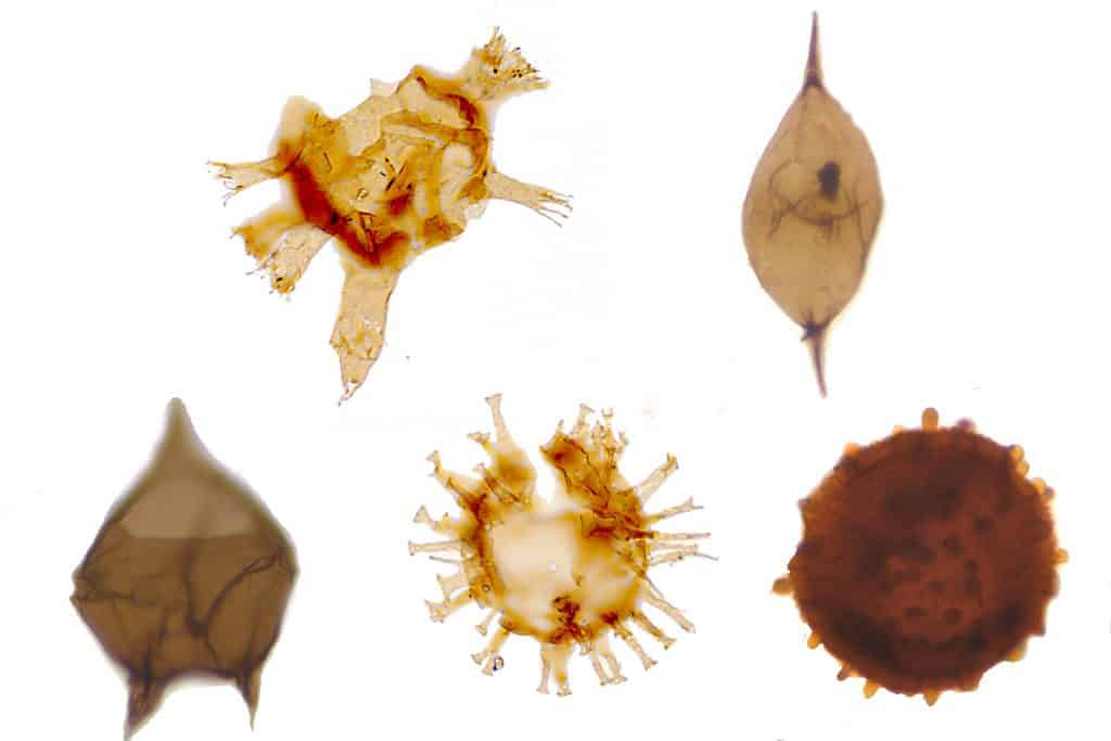 Paper Overview – Fernando Mantilla Duran – Eocene palynology of Colombia South America Petrostrat Dinocysts and Spores